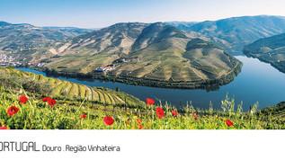 ref.ª 254 | Douro, Região Vinhateira