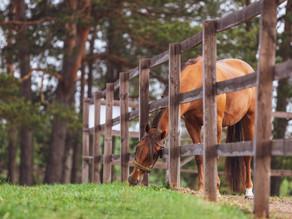 Die Verdauung des Pferdes