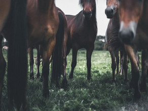 Mauke beim Pferd: Erkennen und behandeln