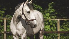 Der individuelle Trainingsplan für Pferde