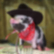 Pig in Costume.jpg