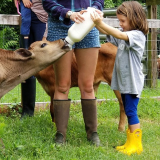 Baby bottle calves_edited.jpg