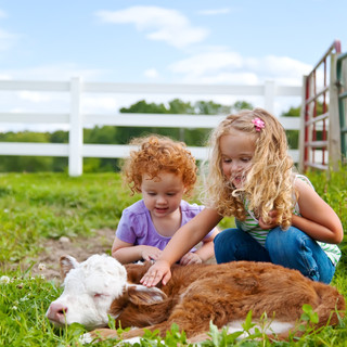 Girls with baby cow.jpg