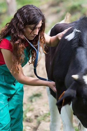 Vet tech with cow.jpg