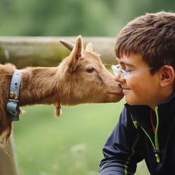 Farm Camp boy and Goat