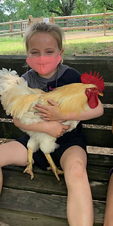 Piper Hill Chicken.jpg