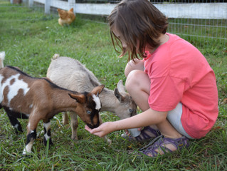 Exposure to farm animals in early childhood might help boost childrens immune system.