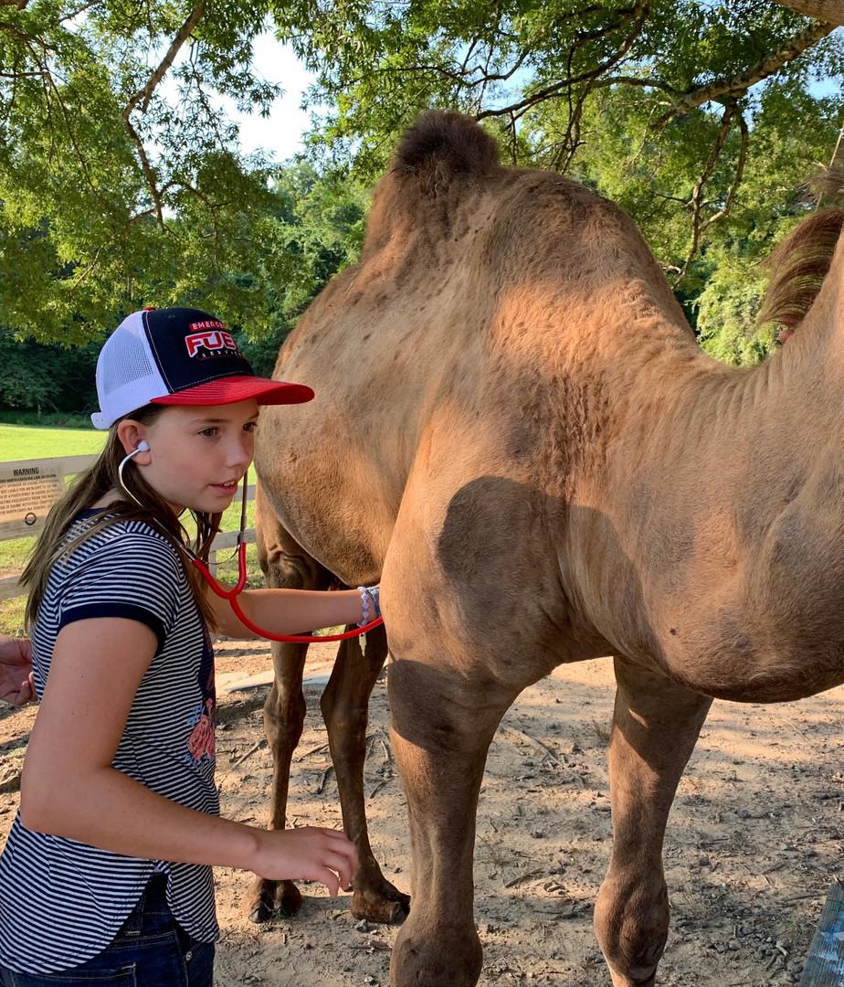 Camel%20Check%20up_edited.jpg