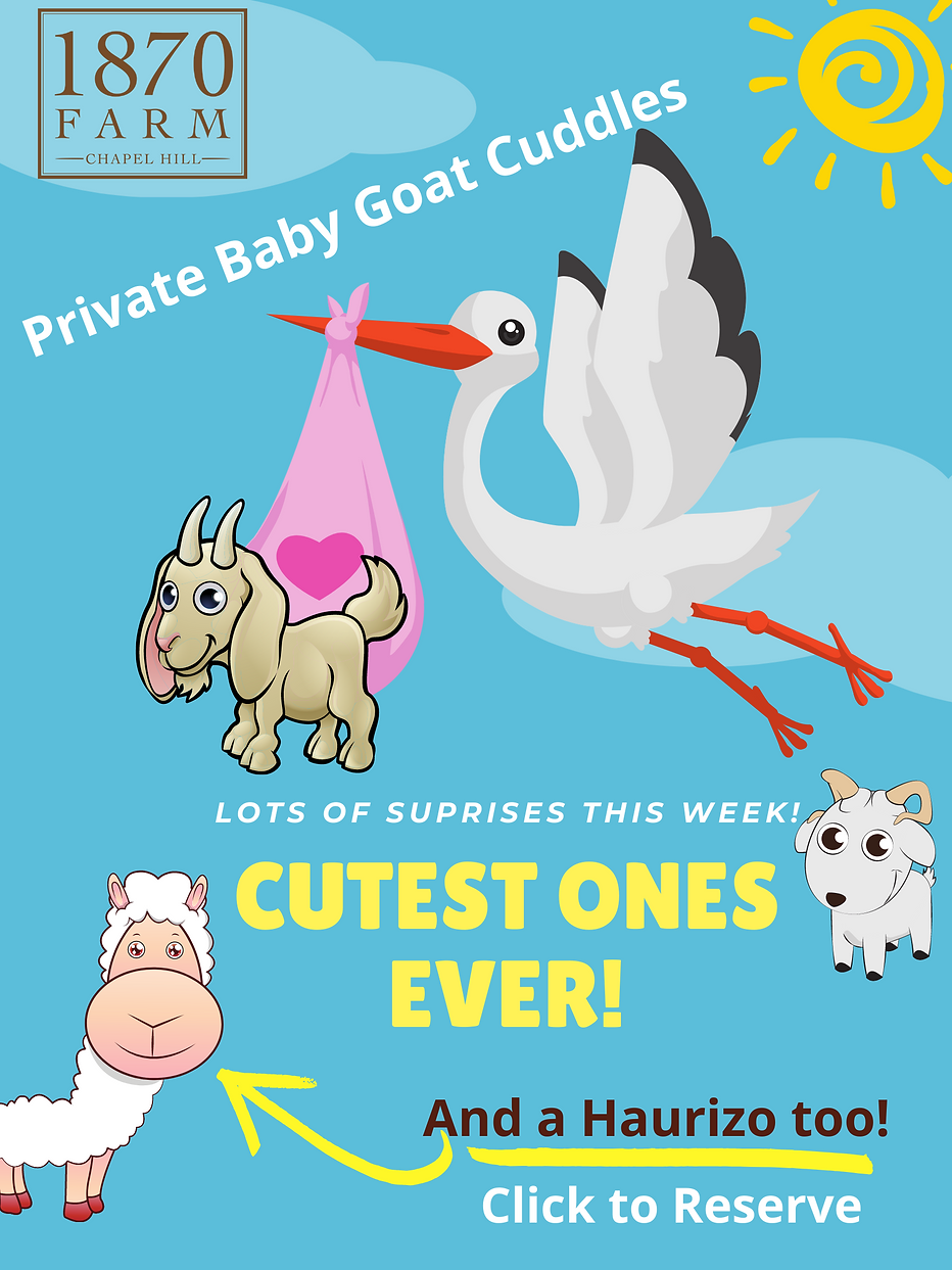 Baby Goats 2021.png