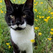 Meow-Stauche
