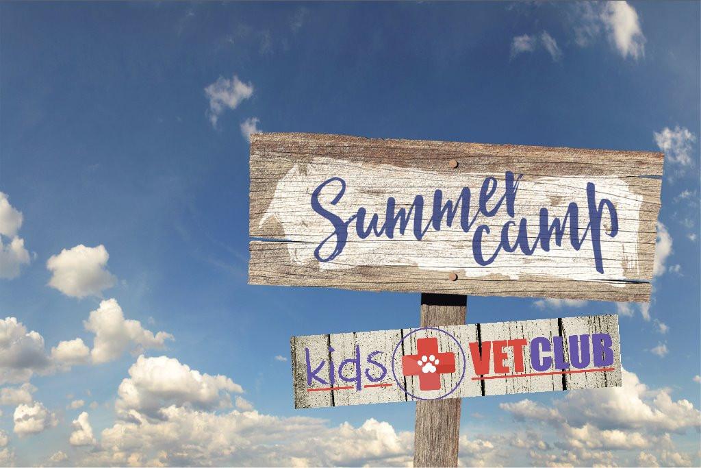 Summer Camp KVC Istock.jpg