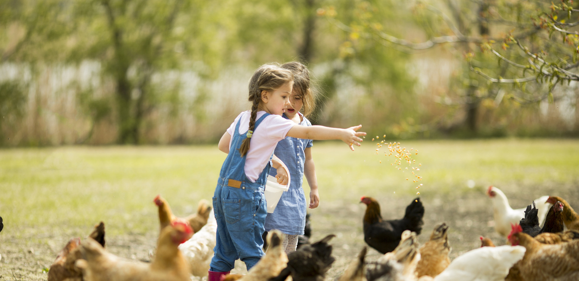 Girls feeding chickens.jpg