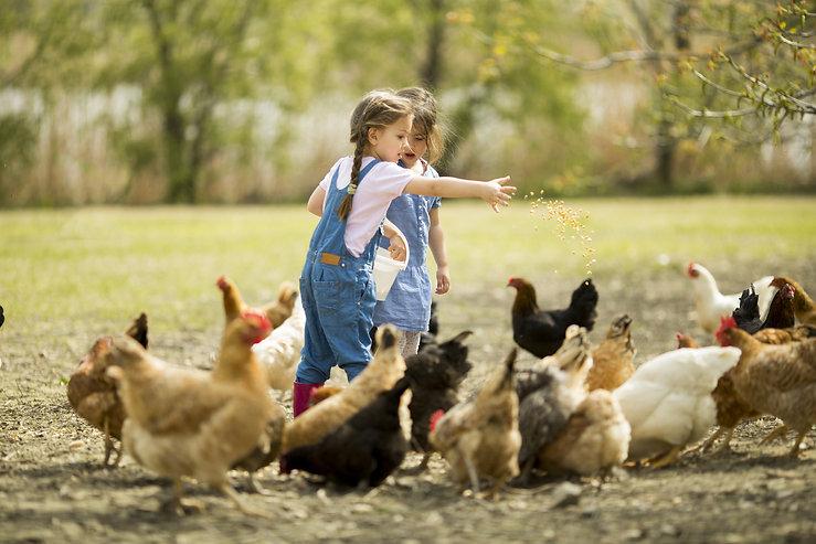 Girls feeding chickens.jpg