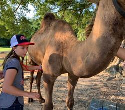 Camel Check up