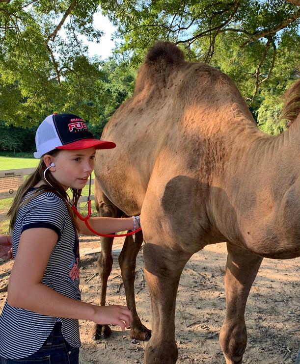 Camel Check up.jpg