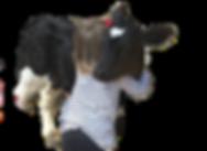 Cow%20Hug%20Unedited_edited_edited_edite