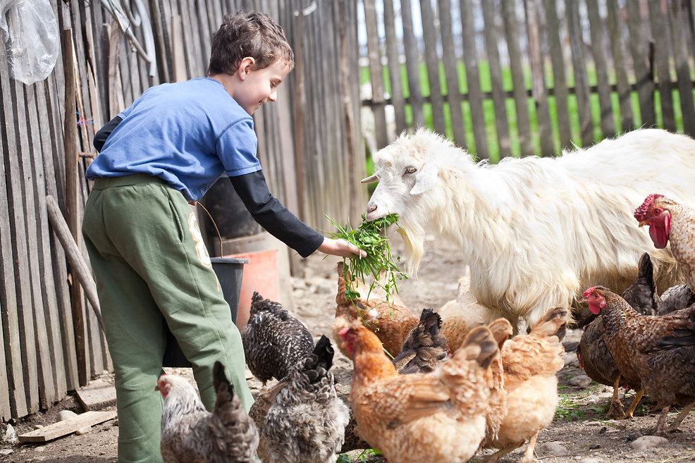 Boy feeding Farm animals.jpg