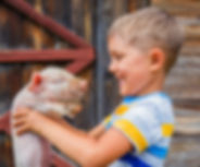 Boy with piglet Old Mill Farm Durham
