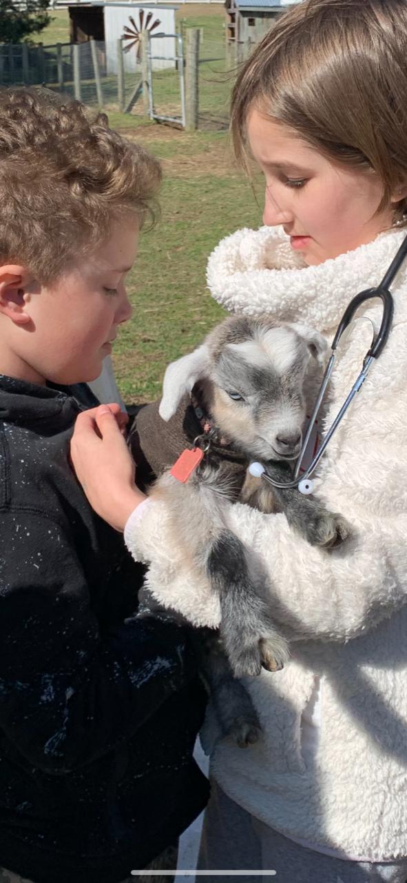 Boy & Girl vet Goat