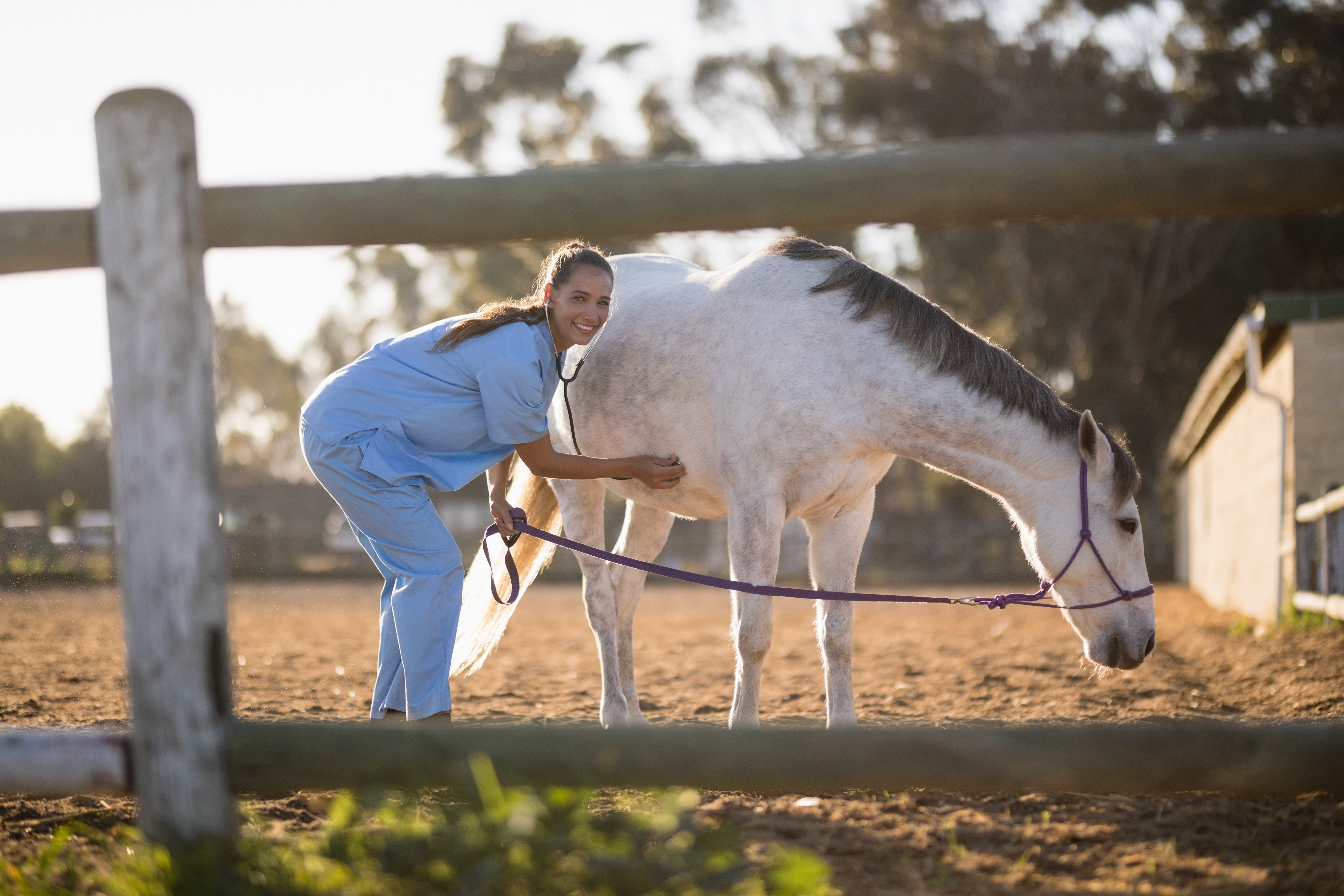 Evening Vet and Horse at 1870 Farm