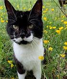 adopt Mustache.jpg