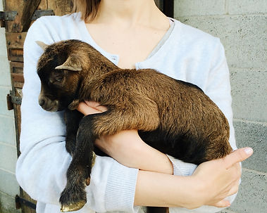 Girl holding cute newborn goat. Farm lif