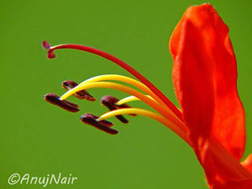 'Love, love, love' is a poem written by Anuj Nair. It is a Picture poem / Photo poem.