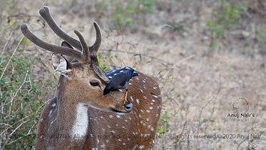AnujNairDSC_3033-flickr.jpg