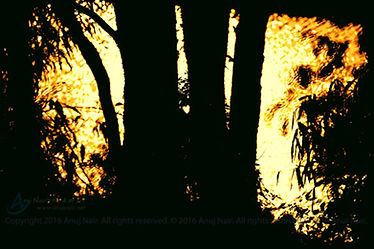 Fuel Is Not The Flame is a poem written by Anuj Nair. It is a Picture poem / Photo poem.