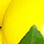 Lemonlady.png
