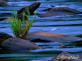 'Flow' is a poem written by Anuj Nair. It is a Picture poem / Photo poem.