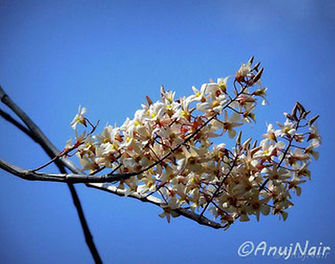 'Spring' is a poem written by Anuj Nair. It is a Picture poem / Photo poem about Spring.