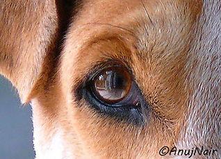 Anuj Nair poem- I/Eye