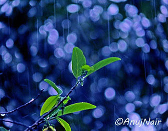 It Rained At Night is a poem written by Anuj Nair. It is a Picture poem / Photo poem about rain at night..