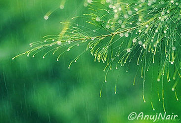 'Rain' is a poem written by Anuj Nair. It is a Picture poem / Photo poem about rain..
