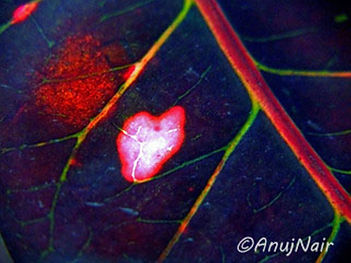 Heart and Soul is a poem written by Anuj Nair. It is a Picture poem / Photo poem.