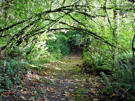 Wilderness Peak Loop