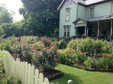 Miss Annie's garden
