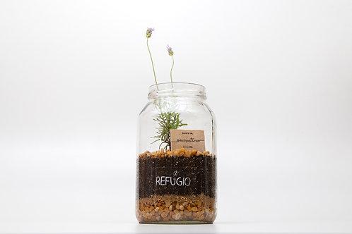 Plantado  Caixa de Experiência Auto Cuidado Anti Estresse