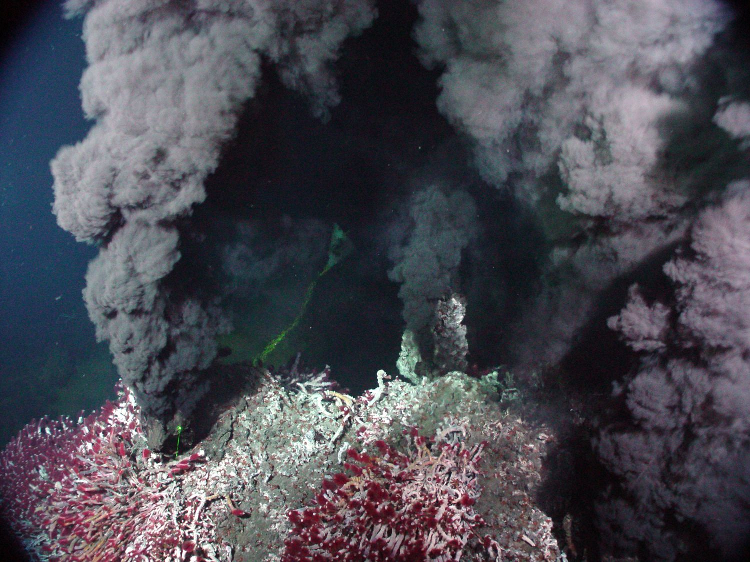 an analysis of the ecosystems in hydrothermal vents