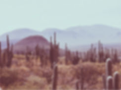 OAXACA DESERT SMALL.jpg