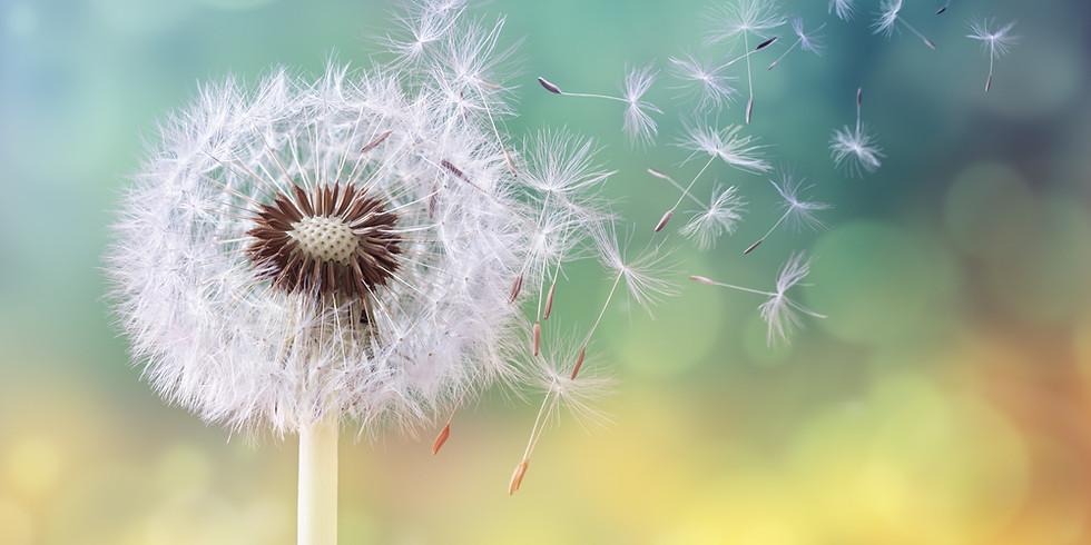 bloom: seek and find