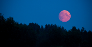 Full Pink Moon, April 11