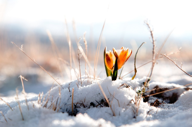 Like nature, the transition from winter to spring can awaken and revive us.