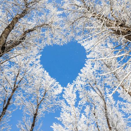 Seasonal Living: Winter Wonder