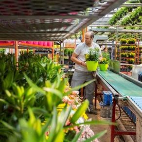 Greenhouse Worker
