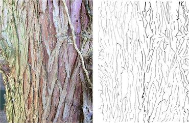Bark template.jpg