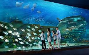 singapore sea aquarium.jpg