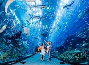 Dubai mall aquarium.jpg