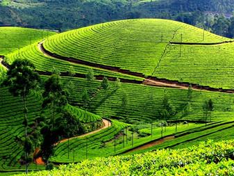 """Sri-lanka - """"WOMEN ONLY TRIP"""""""